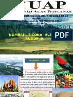 regionesnaturalesdelperurdn-120801171249-phpapp01