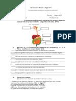 Evaluación Sistema Digestivo