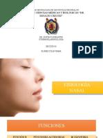Fisiologia Nasal