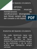 Anatomía del Aparato circulatorio.pptx