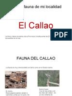 Fauna Del Callao