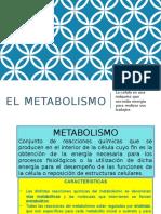 elmetabolismo.ppt