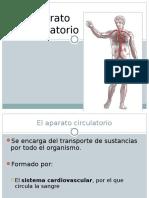 sistemacirculatorio 2