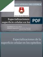 especializacionesdelasuperficiecelularenlosepitelios-121108121640-phpapp01
