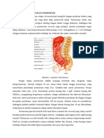 anatomi-dan-fisiologi-peritoneum.docx