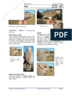 262 Streptopelia Decaocto PALOMA