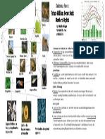 deciduous forest food web