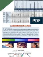 Leishmaniosis -Bartonelosis en El Peru