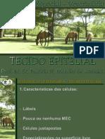 3. TECIDO EPITELIAL.pptx
