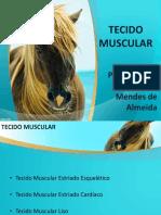 3. Tecido Muscular