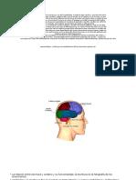 Cerebro Escritura