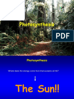 photosynthesis5.ppt