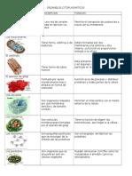 Organeloscitoplasmaticos