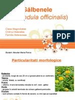Proiect Galbenele Calendula officinalis