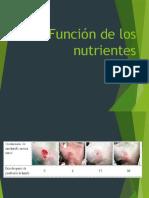 Los Nutrientes y sus funciones