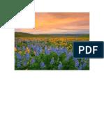 campo florido.docx