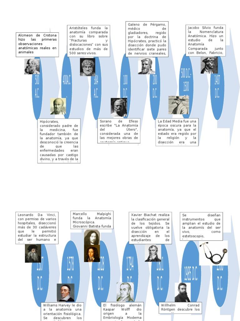 Historia de La Anatomía Línea Del Tiempo