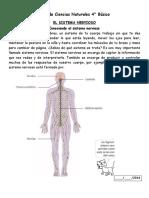 guia sistema nervioso 4°.docx