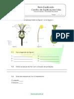 2.1 Diversidade Das Plantas as Plantas Com Flor Ficha de Trabalho 1