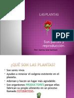 Las Plantas (1)