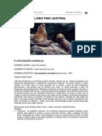 Lobo Fino Austral (1)