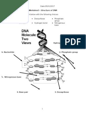 biology 12 unit 5 dna worksheet - dna strucuture 1 ...