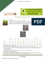 El Cultivo de La Zanahoria en Maceta _ ECOagricultor