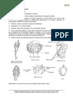 1-Betulaceae.pdf