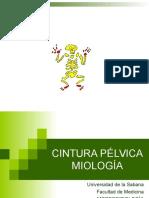 28887078 Cintura Pelvica