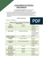 CÉLULA EUCARIOTA VS CÉLULA PROCARIOTA.docx