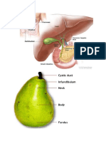 ana gall blader-4 tahapan kole-bilary disorder.docx
