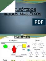 Nucleotidos y Nucleoprotreinas