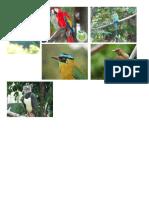 Aves Nacionales