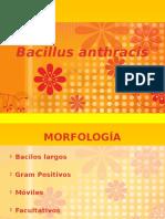 Bacillus Anthracis 2012-1
