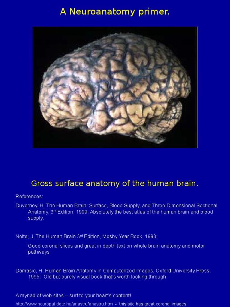 Week 2 - Neuroanatomy | Frontal Lobe | Parietal Lobe