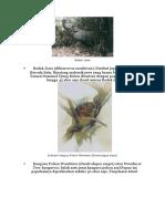 5 Hewan Dan Tumbuhan Langka