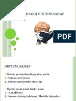 Fisiologi Sistem Saraf Dan Tumbuh Kembang (Sarah)