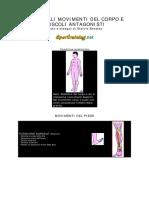 Principali Movimenti Corpo e Muscoli Antagonisti
