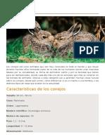 Conejo de Monte Ficha Biologica