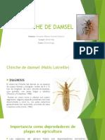 Chinche de Damsel