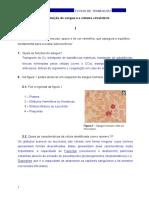 Ficha1PROF.docx