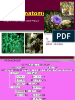 07. Plant Anatomi-plant Tissue