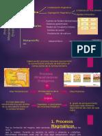 Procesos Mineralizadores Endógeno