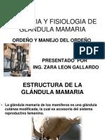 GLANDULA MAMARIA -ORÑENO 2012.pdf