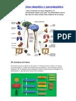 Sistema Nervioso Salo