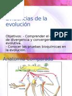 evidencias evolucion 3medio