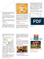 myslide.es_triptico-el-reino-fungi.docx