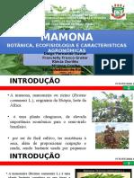 SEMINÁRIO FITOTECNIA MAMONA