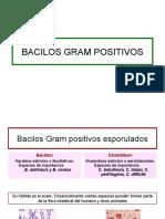 1.Bacilos Gram Positivos