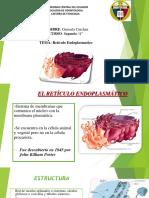 Fisio Reticulo Endoplasmatico